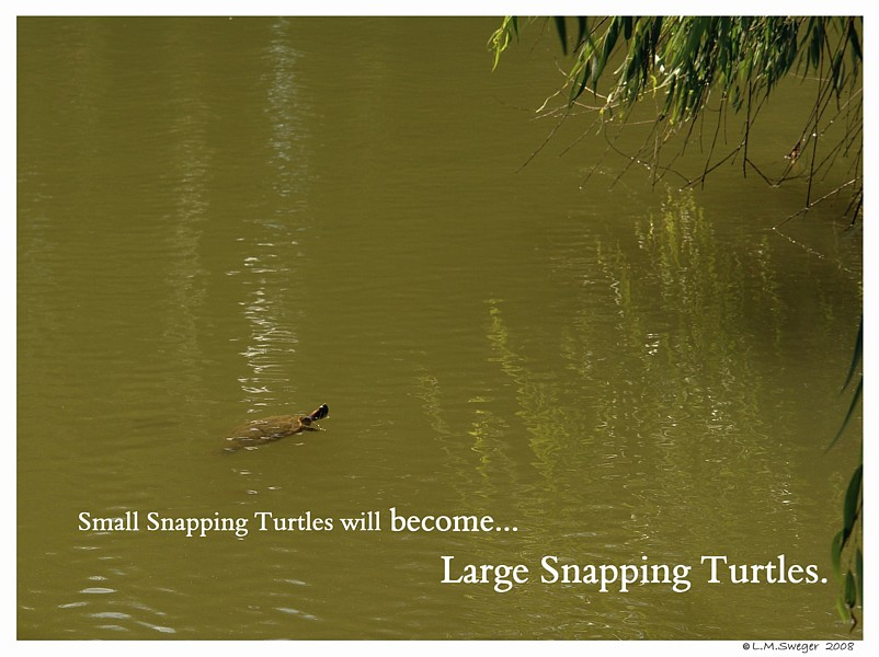Small Snapping Turtle