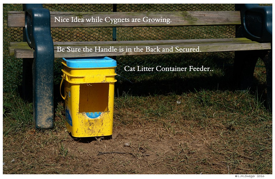 Kitty Litter Feeder