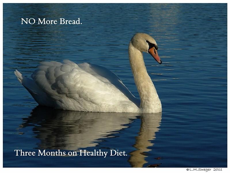 Swan Bread Stopped