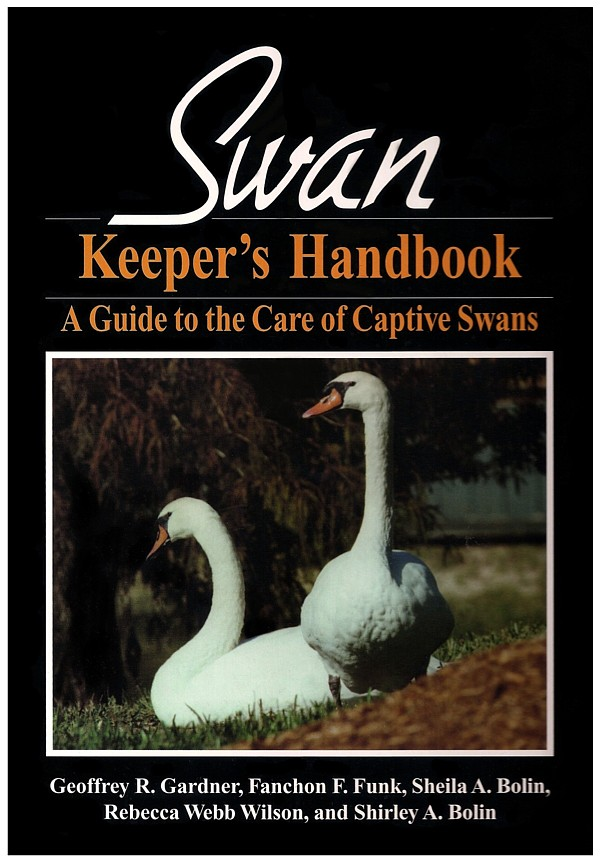 Feeding Swan Cygnets