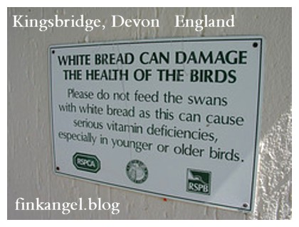 UK DO NOT Feed Swans Bread NO Bread Poor Diet for Swans