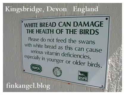 UK DO NOT Feed Swans Bread