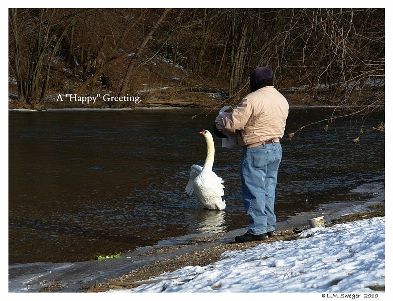 Swan Happy Greeting