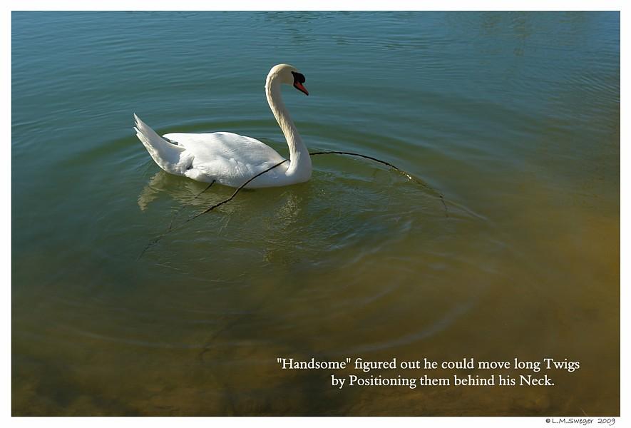 Swan Problem Solves