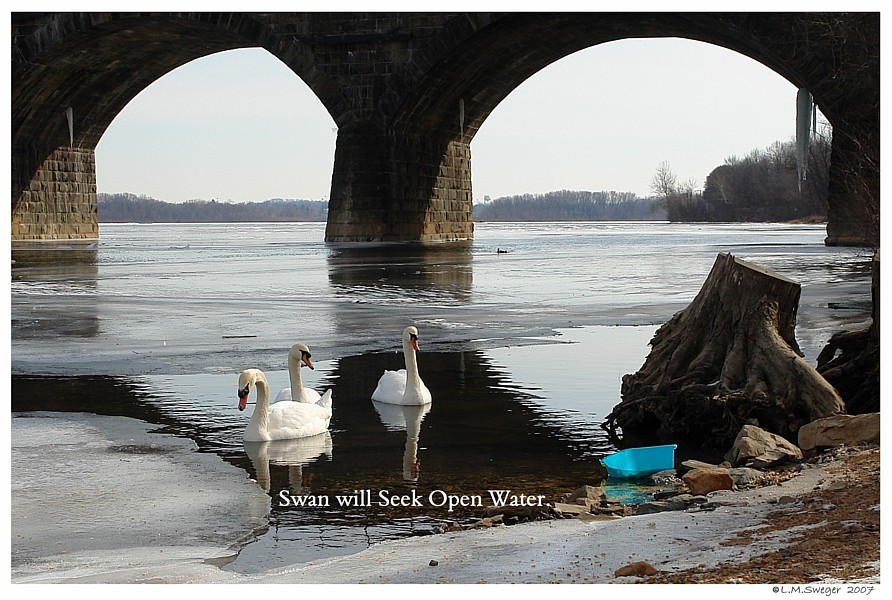 Swans Seek Liquid Water