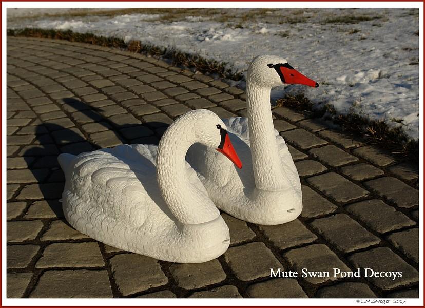 Mute Swan Decoys