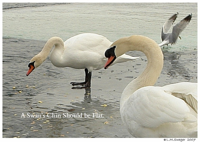 Swan Flat Chin Swan Under Chin-Tongue Bulge Impaction