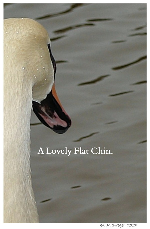 Swan Healthy Chin Image Under Chin-Tongue Bulge Impaction