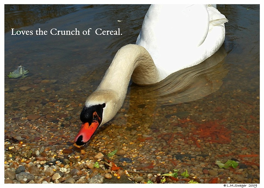 Swans Cereal Snack Mix