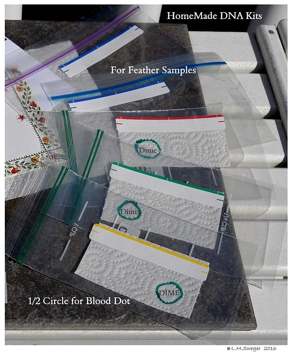 SWAN DNA-Test Kits Swans DNA-Sex Testing