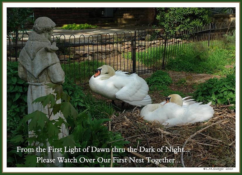 Bless Nesting Swans