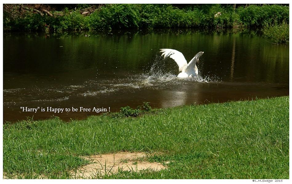 Swan Trust Broken