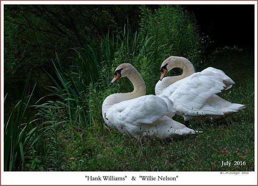 Hank Williams Willie Nelson