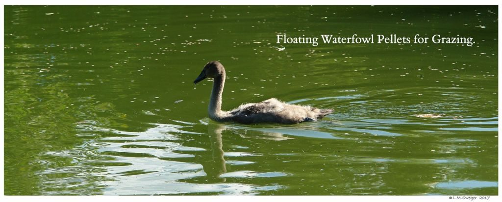 Floating Waterfowl Pellets