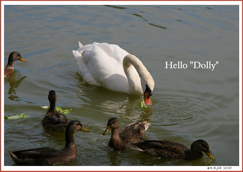 Swan Dolly