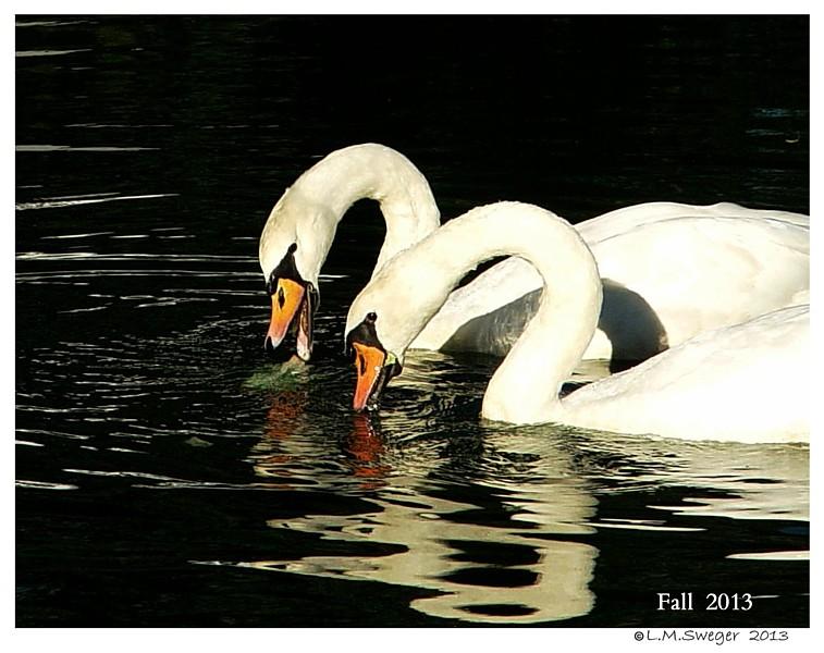 Swan Under Chin Tongue