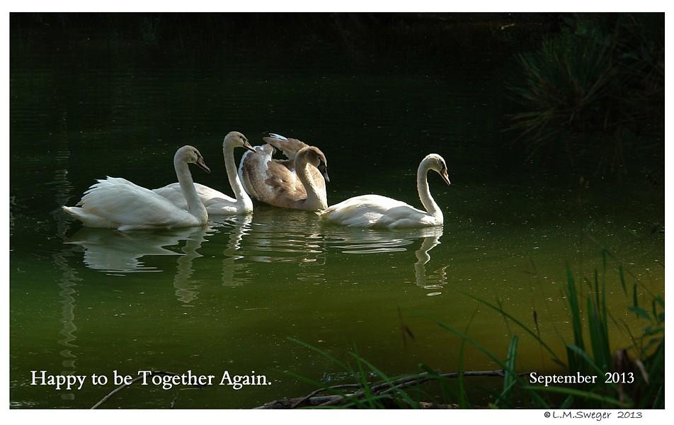 Swans Trust