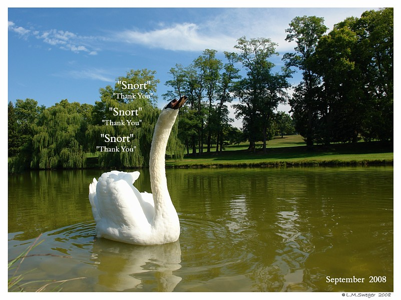 Mute Swan Vocal