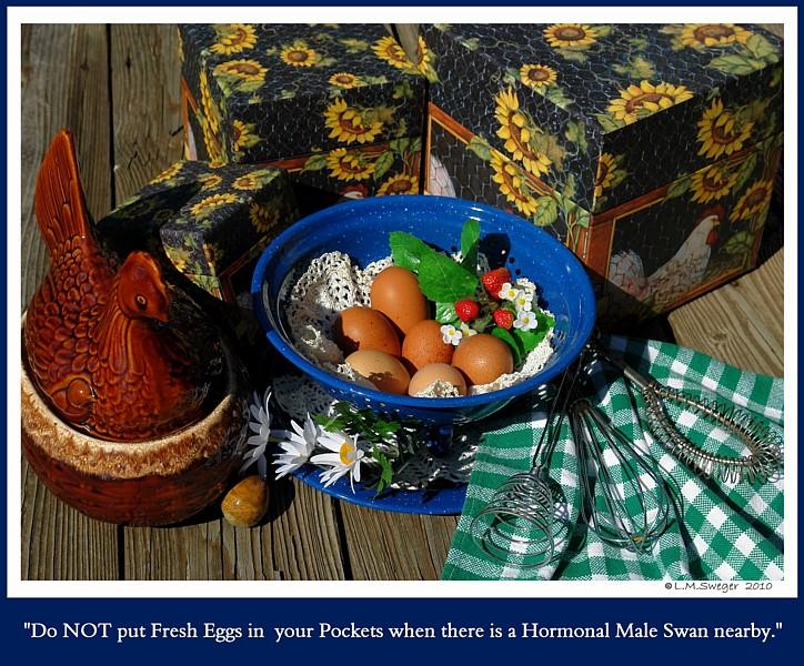 Eggs in Pocket