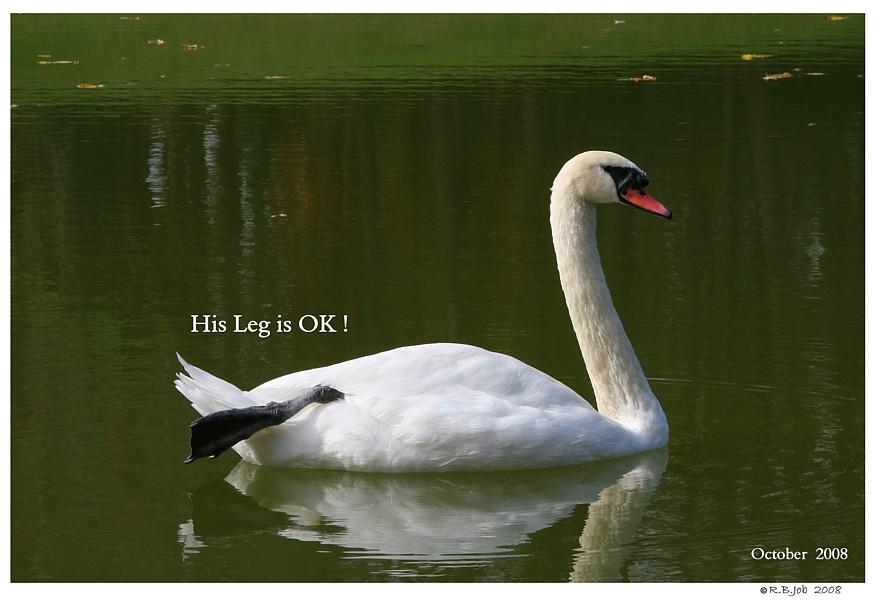 Swan Foot Leg Back