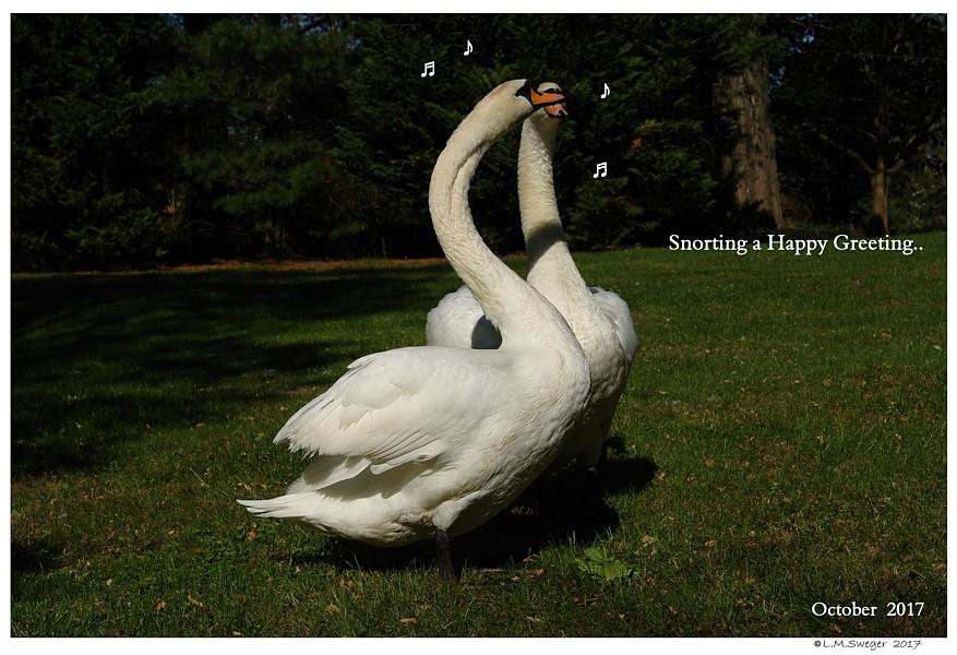Happy Swan Greeting