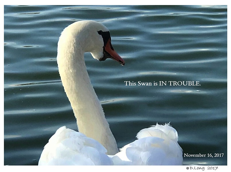 Swan Under Tongue Chin Impaction