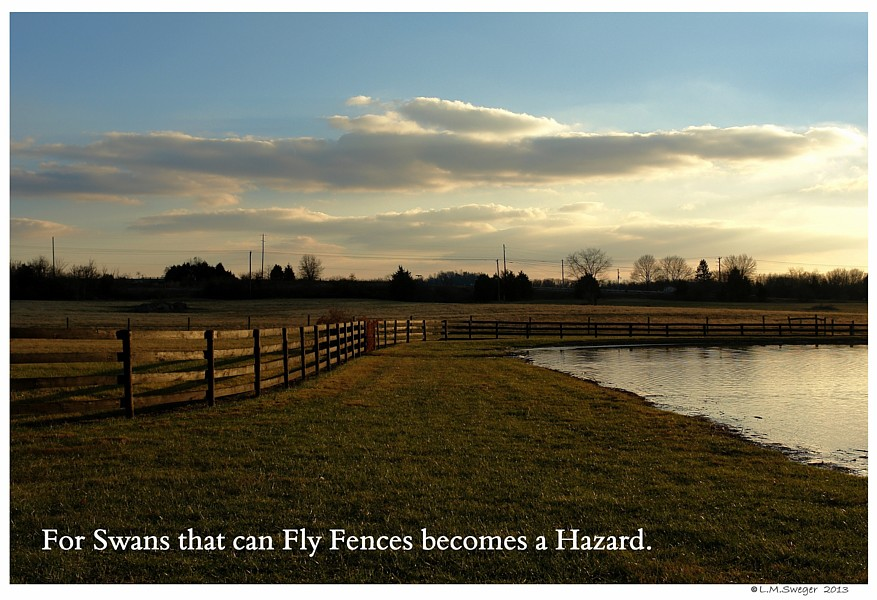Fence by Pond