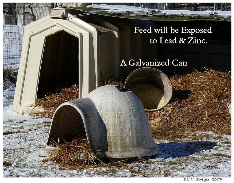 Swan Lead Zinc Captive Mute Swans Feeding Swans