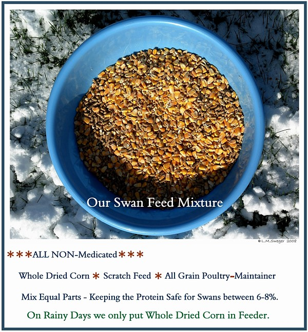 Feed Mix for Swans Captive Mute Swans Feeding Swans