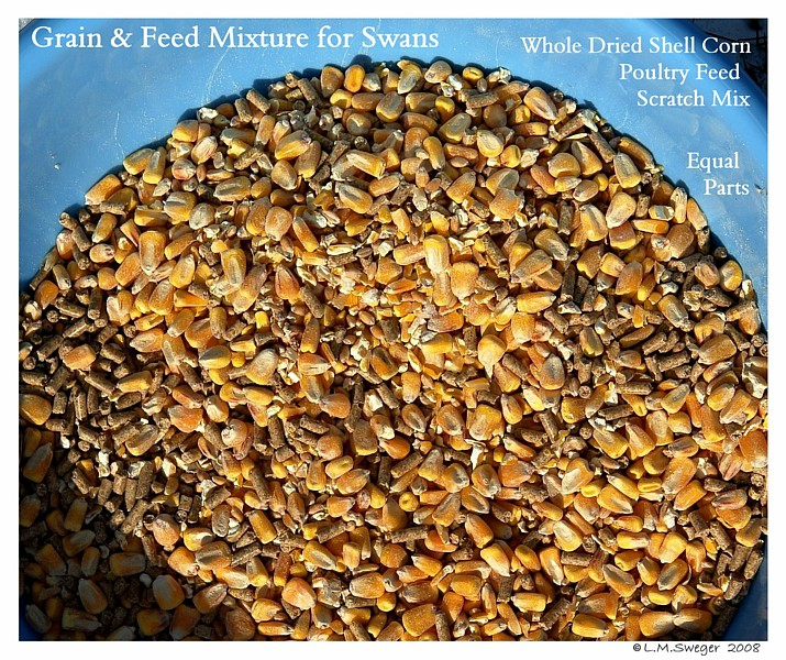 Swan Feed Mix