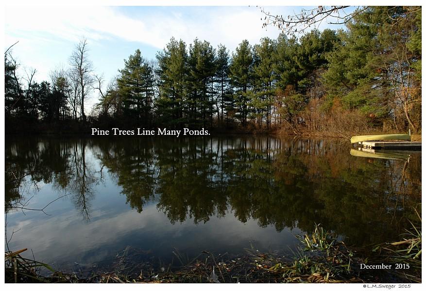 Pond Pine Trees Swan Under Chin-Tongue Bulge Impaction