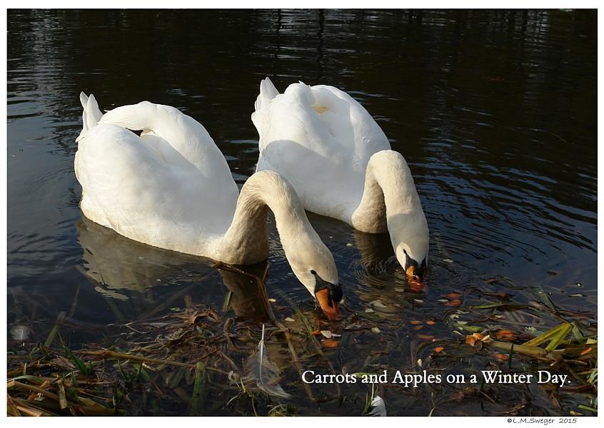 Vegetables for Swans