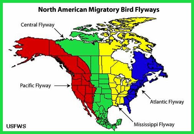 North American Migration Flyways