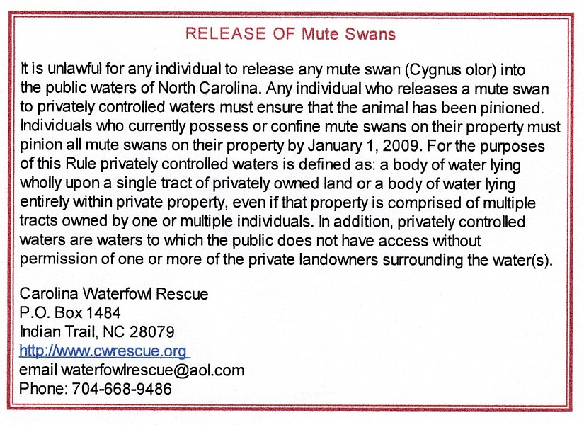 NORTH CAROLINA Mute Swan