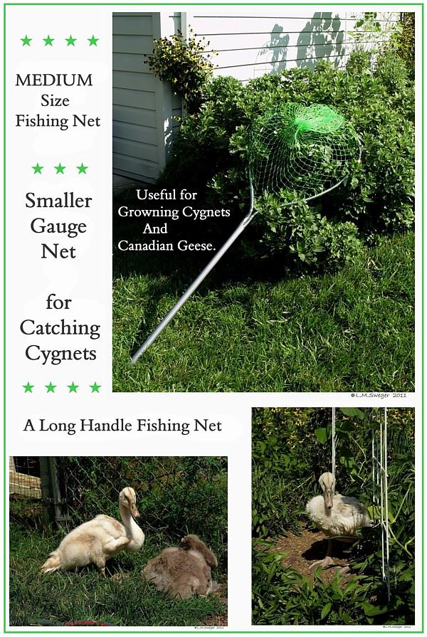 SWAN Cygnet Net