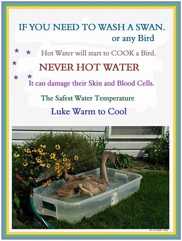SWAN Never HOT WATER