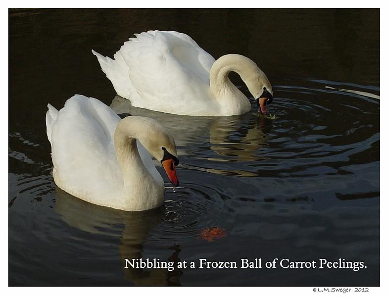 Frozen Carrot Ball Swans are Vegetarians