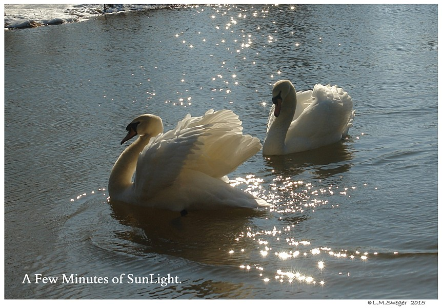 Winter on the Swans Pond