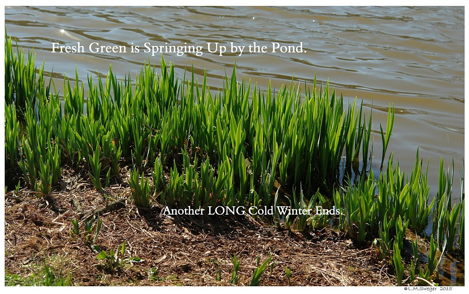 Spring Pond Plants