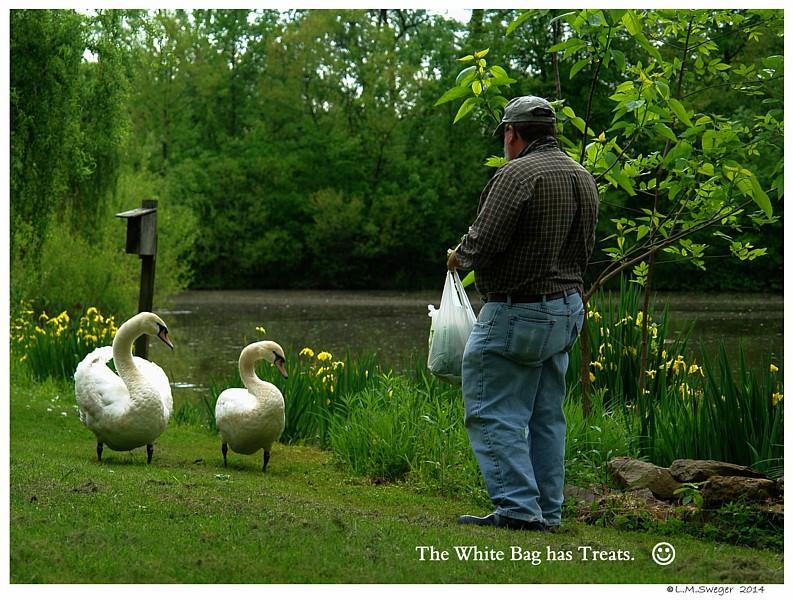 Swans White Bag