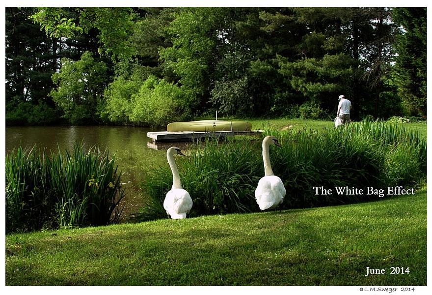 Swan White Bag