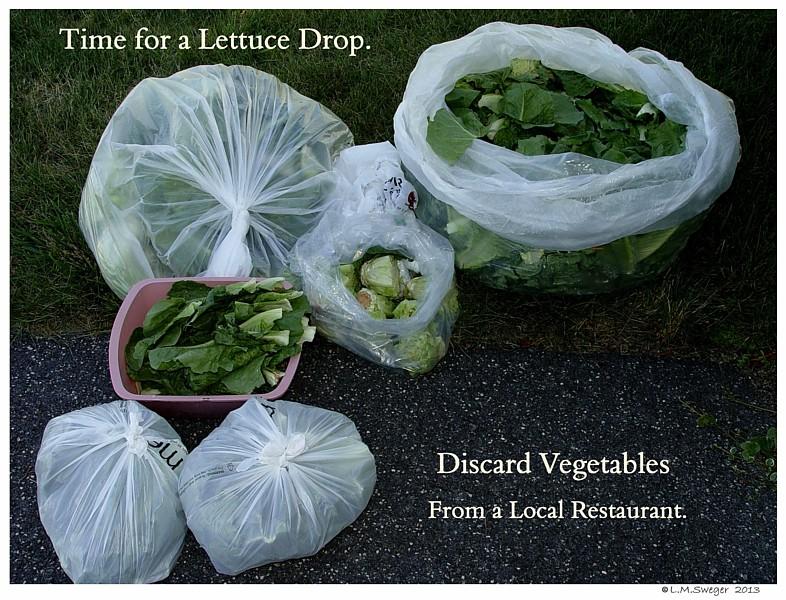 Discard Vegetables Swans are Vegetarians