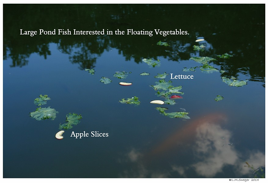 Vegetable and Fish Swans are Vegetarians