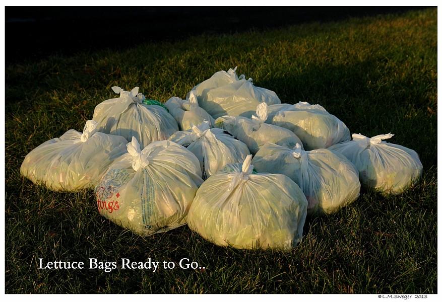 Lettuce Drop Bags