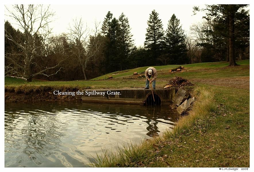 Pond Spillway Swans are Vegetarians