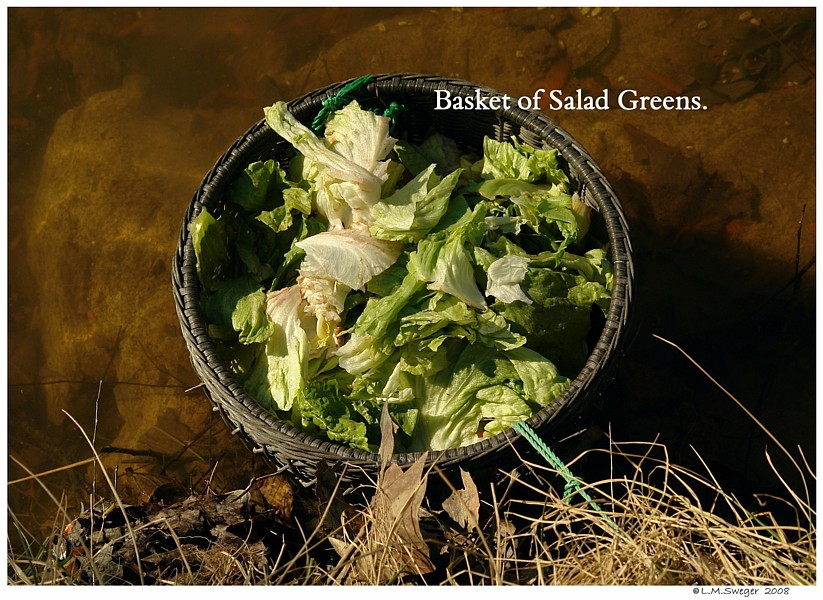 Salad Green Basket