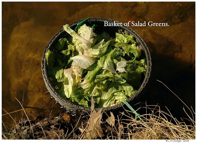 Salad Green Basket Swans are Vegetarians