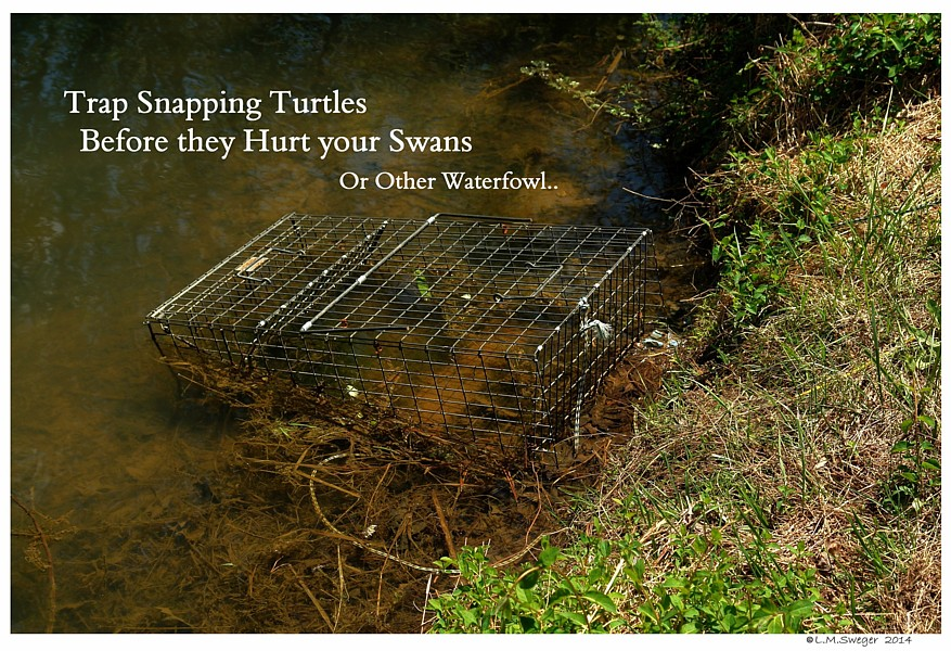 Trap for Snapping Turtles
