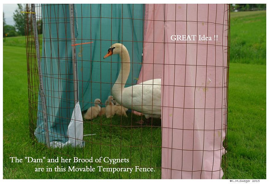 Swan Temporary Fence