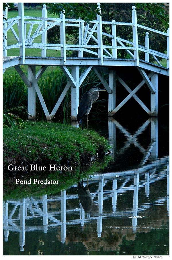 Pond Predator